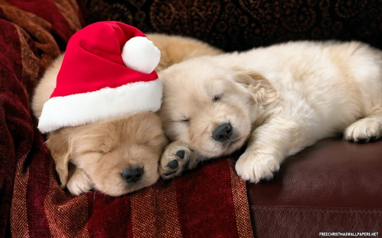 cute-christmas-puppies-539037